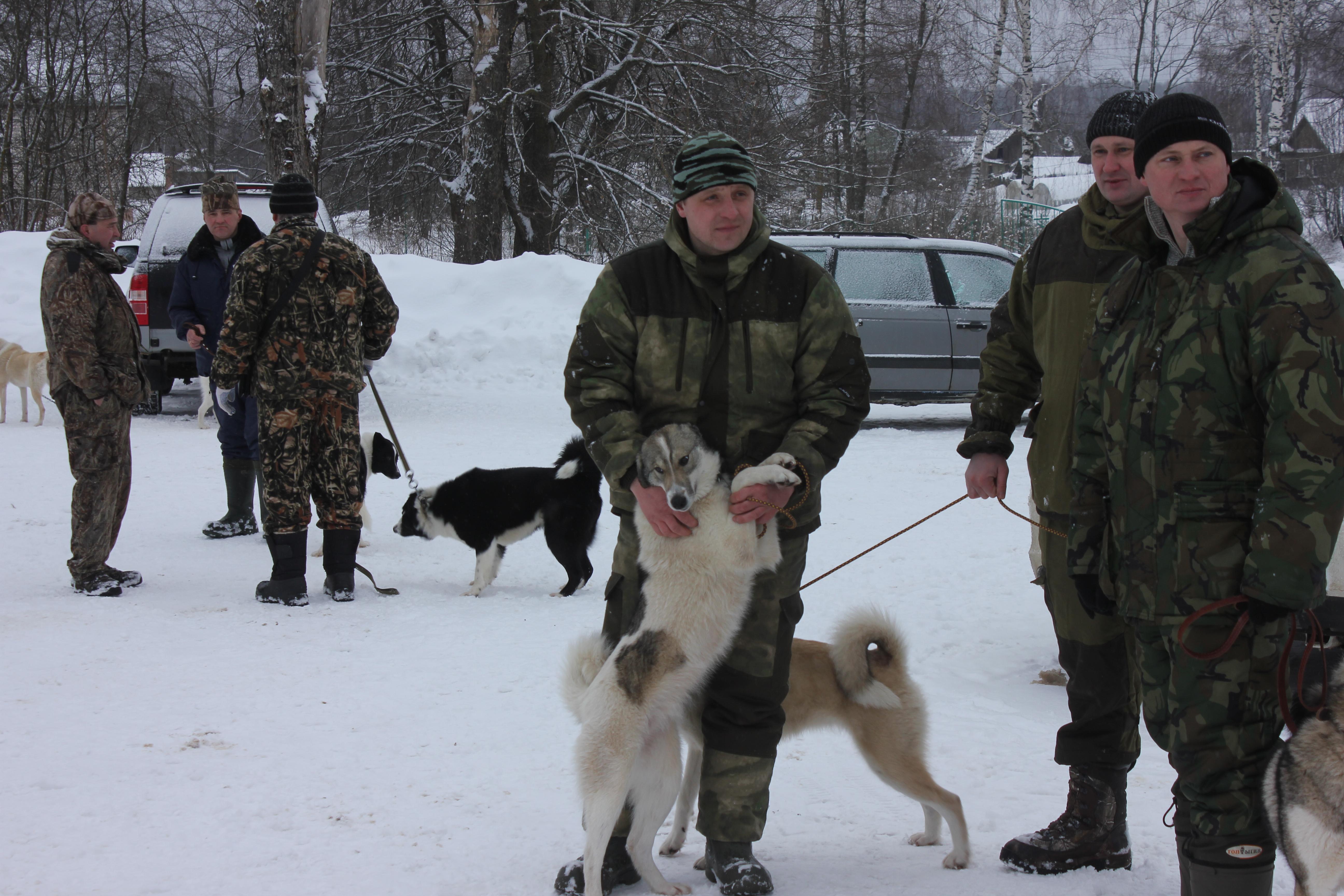 История породы, воспитание, особенности охоты с западносибирской ...   3456x5184